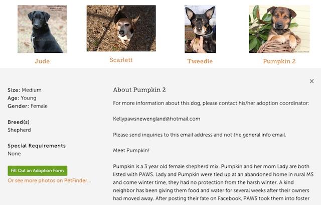 A screenshot of a progressively enhanced PAWS dog listing